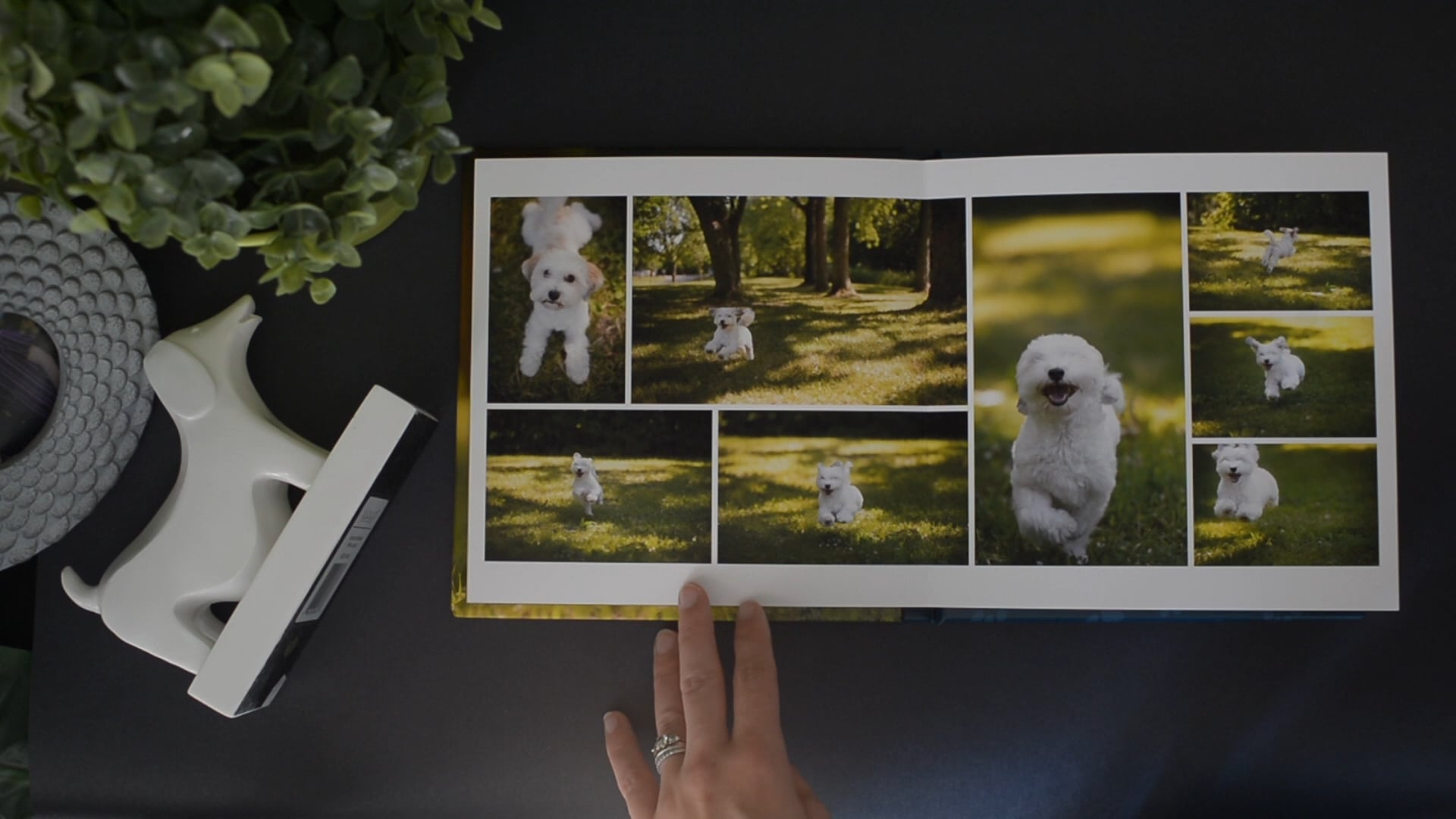 Press to watch a full pet album flip-through